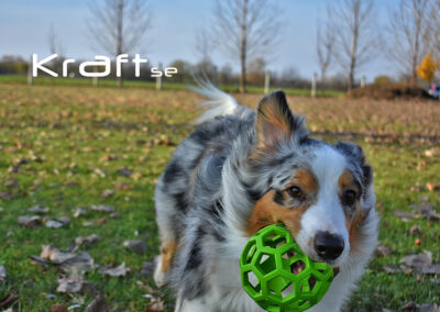 Kraft agility novemberi verseny - fotó