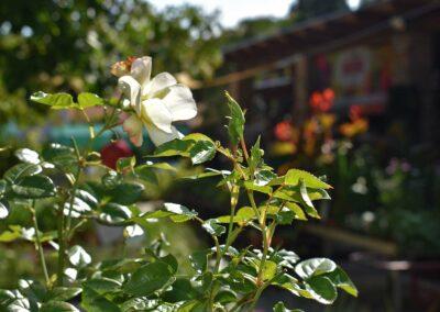 Latinkert fotózás szeptember